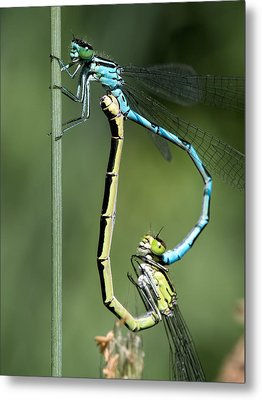 Dragon Fly Metal Print by Leif Sohlman