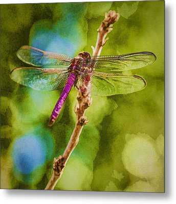 Dragon Fly Or Not Painterly Metal Print