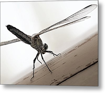 Metal Print featuring the photograph Dragon Of The Air  by Micki Findlay