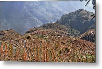 Dragon S Backbone Rice Terraces Metal Print by Alexandra Jordankova