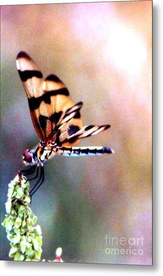 Metal Print featuring the photograph Dragon Wings by Michael Hoard