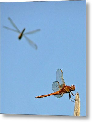 Metal Print featuring the photograph Dragonflies by Jim Whalen