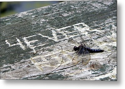 Metal Print featuring the photograph Dragonfly 4ever by Jim Whalen