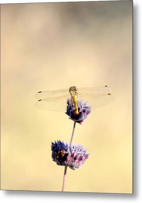 Metal Print featuring the photograph Dragonfly by AJ  Schibig