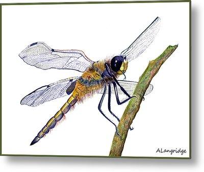 Hairy Dragonfly Of England Metal Print by Alison Langridge