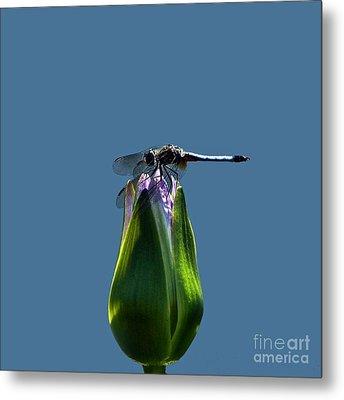 Dragonfly Appreciates A Flower Metal Print by Byron Varvarigos