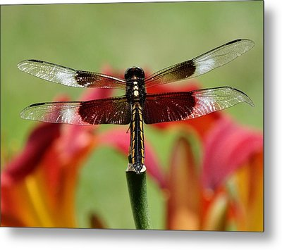 Dragonfly Beauty Metal Print by Rebecca Overton