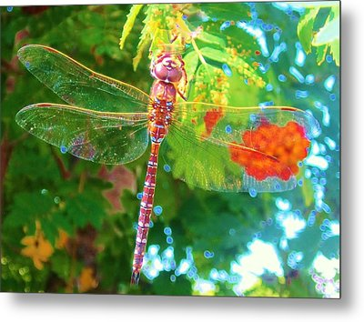 Dragonfly Metal Print by Cathy Long