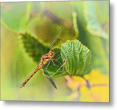 Dragonfly Days II Metal Print