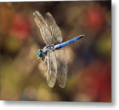 Dragonfly Floating Metal Print