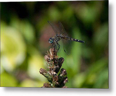 Metal Print featuring the photograph Dragonfly by Greg Graham