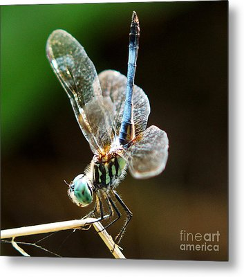 Dragonfly Headstand Metal Print by Kim Pate