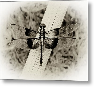 Dragonfly In Sepia Metal Print by Tony Grider