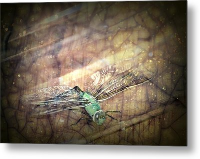 Dragonfly Leap Of Faith Metal Print by Dawna Morton
