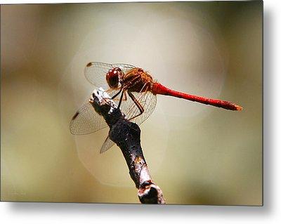 Dragonfly Light Metal Print by Christina Rollo