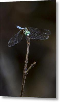 Dragonfly On Branch Metal Print by Paula Porterfield-Izzo