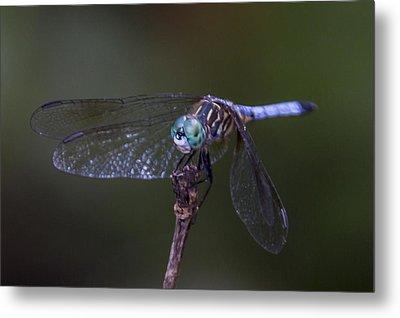 Dragonfly Metal Print by Paula Porterfield-Izzo