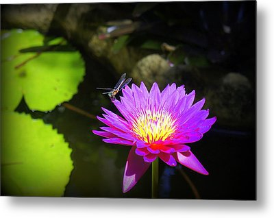 Metal Print featuring the photograph Dragonfly Resting by Laurie Perry