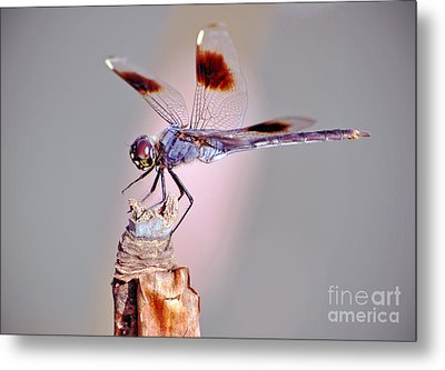 Metal Print featuring the photograph Dragonfly by Savannah Gibbs