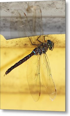 Metal Print featuring the photograph Dragonfly Web by Melanie Lankford Photography