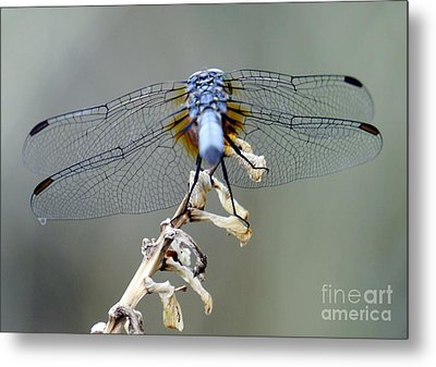 Dragonfly Wing Details II Metal Print by Lilliana Mendez