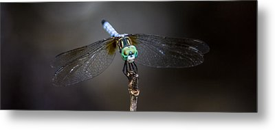 Dragonfly Wings Metal Print by Paula Porterfield-Izzo