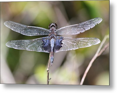Dragons Wings Metal Print