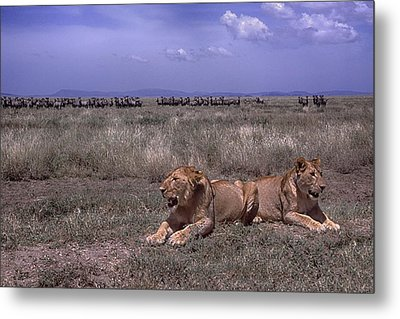 Metal Print featuring the photograph Drama On The Serengeti by Gary Hall