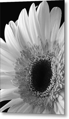 Metal Print featuring the photograph Dramatic Beauty by Dawn Currie