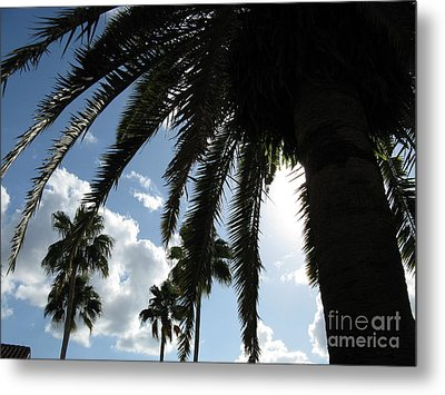 Metal Print featuring the photograph Dramatic Palm by Jeanne Forsythe