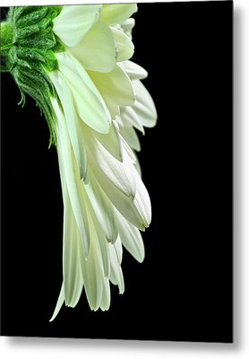 Drape Metal Print by Art Barker