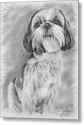 Drawing Of A Shih Tzu Metal Print by Lena Auxier