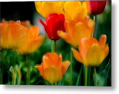 Dream Tulips Metal Print by Michael Hubley