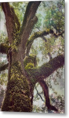 Dreamer's Oak Metal Print by Maria Robinson