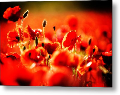 Metal Print featuring the photograph Dreaming Of Poppies by Meirion Matthias