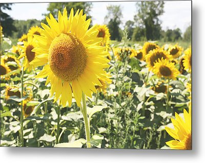 Metal Print featuring the photograph Dreaming Of Summer by Courtney Webster