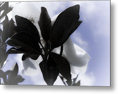 Metal Print featuring the photograph Dreams In The Sky by Janie Johnson