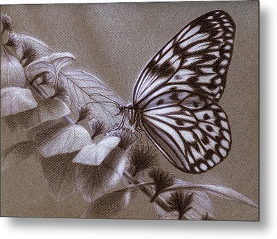 Dreams Sketch Metal Print by Shawn Kawa