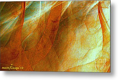 Dreamscape Metal Print by JCYoung MacroXscape