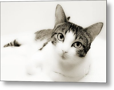 Dreamy Cat 2 Metal Print by Andee Design