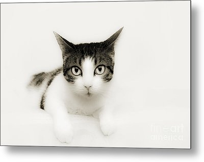 Dreamy Cat Metal Print by Andee Design