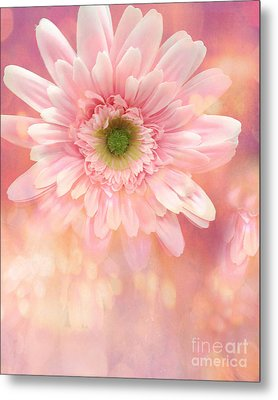 Dreamy Cottage Shabby Chic Pink Yellow Mango Gerber Daisy Flowers - Gerber Daisies Metal Print