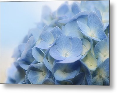 Metal Print featuring the photograph Dreamy Hydrangea by Lisa Knechtel