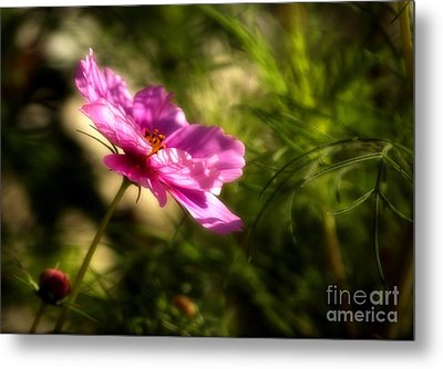 Metal Print featuring the photograph Dreamy Pink Comos by Marjorie Imbeau