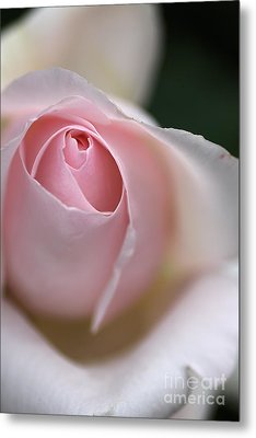 Metal Print featuring the photograph Dreamy Rose by Joy Watson