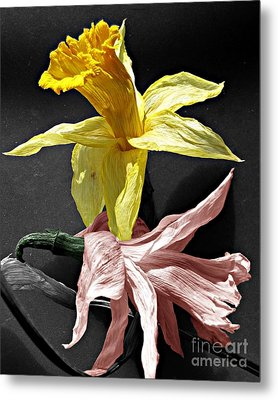 Metal Print featuring the photograph Dried Daffodils by Nina Silver