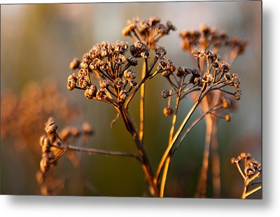 Metal Print featuring the photograph Dried by Erin Kohlenberg