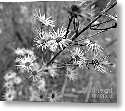Dried Out Perfection Metal Print by Clare Bevan