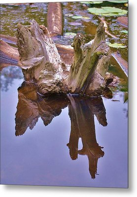 Drifting Reflections Metal Print by Mary Zeman