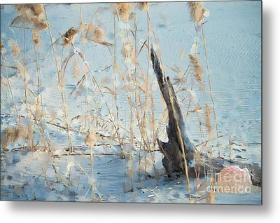 Driftwood Abstract Metal Print by Betty LaRue